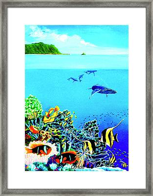 Humpback Whales, Reef Fish #252 Framed Print by Donald k Hall