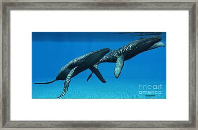 Humpback Whales Surfacing Framed Print by Corey Ford