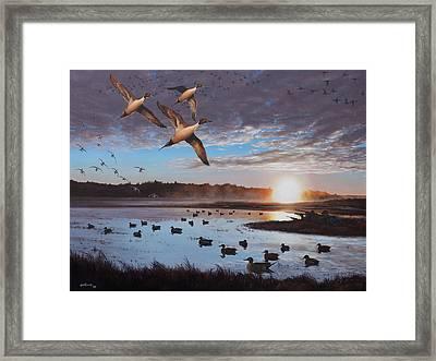 Humphrey Farm Pintails Framed Print