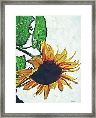 Hung Over Framed Print by Sarah Loft
