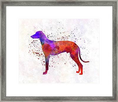 Hungarian Greyhound In Watercolor Framed Print