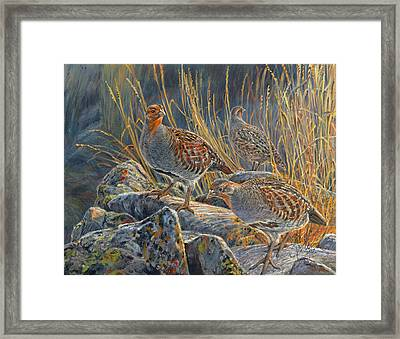 Hungarian Partridges Framed Print