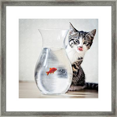 Hungry Framed Print by Anita Meezen