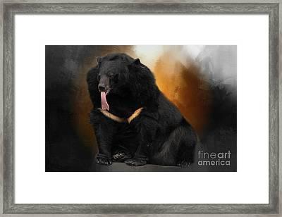 Hungry Bear Framed Print