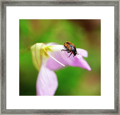 Hungry Beetle Framed Print
