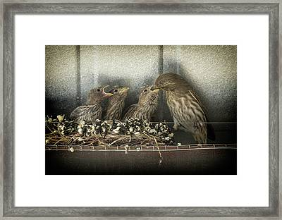 Framed Print featuring the photograph Hungry Chicks by Alan Toepfer
