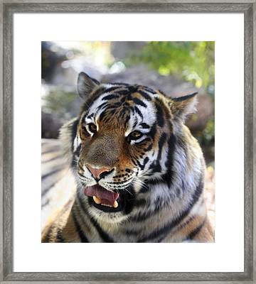 Hungry Eyes Framed Print