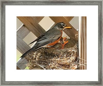 Hungry Mouths To Feed Framed Print by Lara Ellis