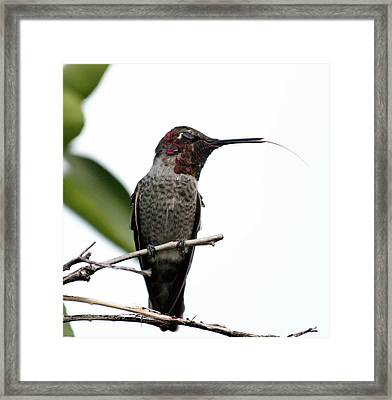 hungry Pete Framed Print by Sue Mayor