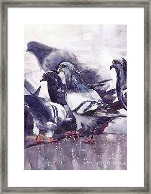 Hungry Pigeons Watercolor Framed Print
