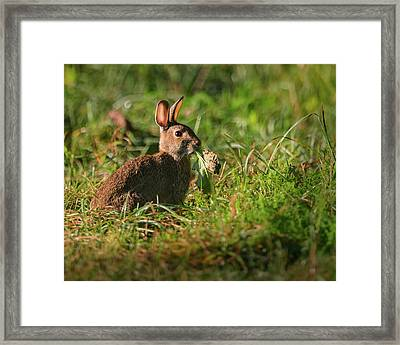 Hungry Rabbit Framed Print