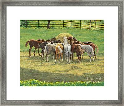 Hungry Yearlings At Big Creek Framed Print by Don Langeneckert