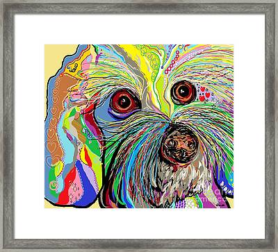 Hunter The Bichon . . . He's A Shoe Man Framed Print