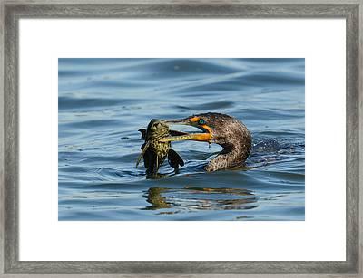 Hunter Framed Print by Fraida Gutovich