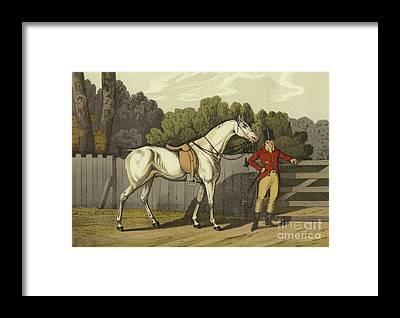 English Horse Framed Prints