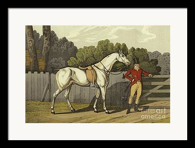 Horse Drawings Framed Prints