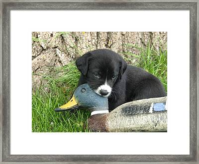 Hunter In Training Framed Print by James Peterson