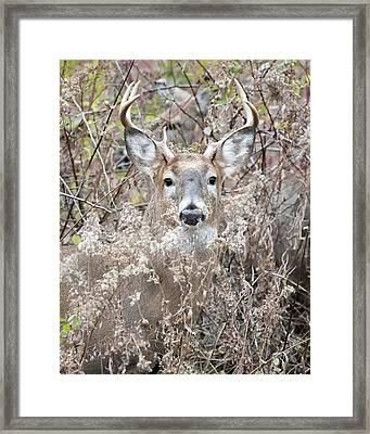 Hunters Dream Framed Print