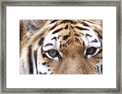 Hunters Eyes Framed Print