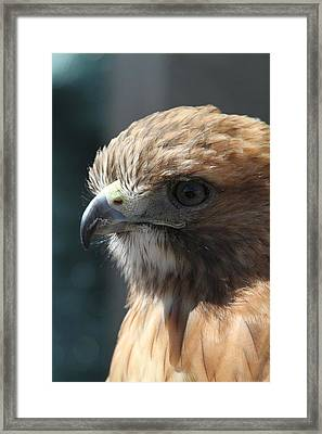 Framed Print featuring the photograph Hunter's Spirit by Laddie Halupa