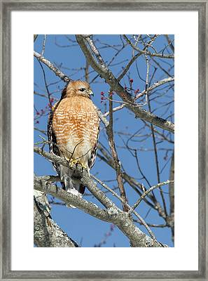 Framed Print featuring the photograph Hunting by Bill Wakeley