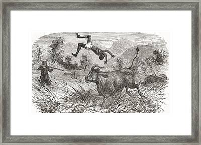 Hunting Buffalo In Africa Framed Print