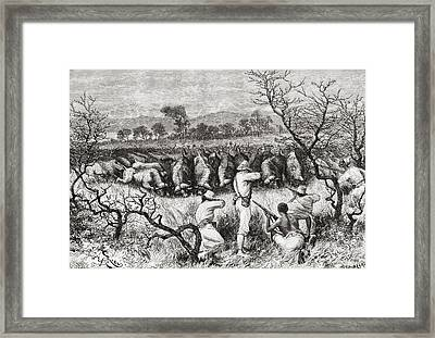 Hunting Buffalo In Central Africa In Framed Print