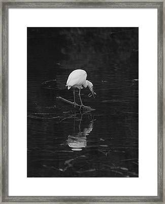 Framed Print featuring the photograph Hunting Egret by Joshua House