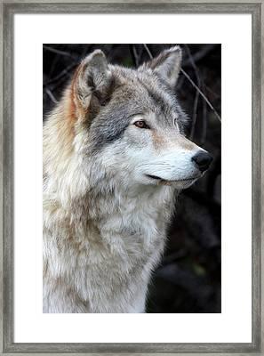 Hunting Eyes - L'oeil Du Chasseur Framed Print