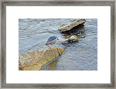 Hunting - Fishing Framed Print by Asbed Iskedjian
