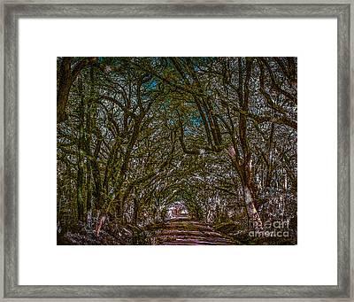 Hunting Island Path Framed Print by Izet Kapetanovic