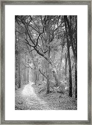 Hunting Island Path  Framed Print by Phill Doherty