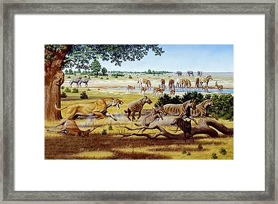 Hunting Sabre-toothed Cat Framed Print by Mauricio Anton