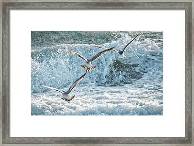 Hunting The Waves Framed Print by Don Durfee
