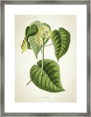 Hura Botanical Print Framed Print