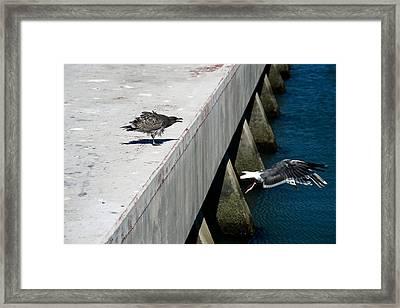 Hurry Back Mum Framed Print by Aidan Moran