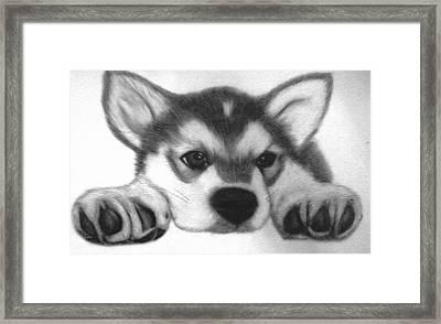 Huskie Pup Framed Print by Susan Barwell