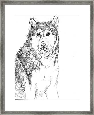 Husky Framed Print by Charme Curtin
