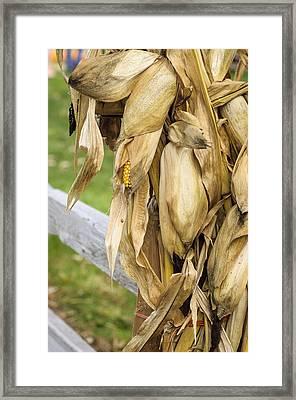 Framed Print featuring the photograph Husky by Christi Kraft