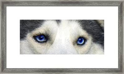 Husky Eyes Framed Print by Jane Schnetlage