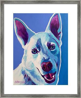 Alaskan Husky - Joaquin Framed Print by Alicia VanNoy Call