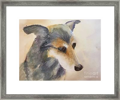 Husky Mix Framed Print by Yohana Knobloch