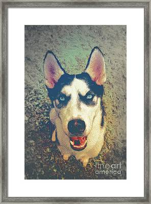 Husky Modern Framed Print by Angela Doelling AD DESIGN Photo and PhotoArt