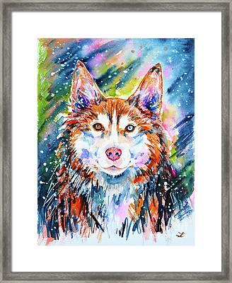 Husky Framed Print by Zaira Dzhaubaeva
