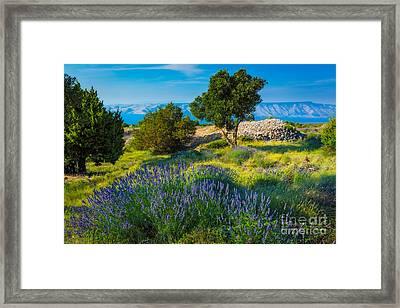 Hvar Lavender Field Framed Print by Inge Johnsson