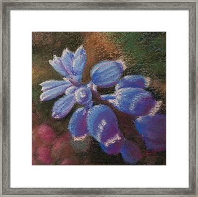 Hyacinth Dream Framed Print
