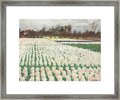 Hyacinth Fields Framed Print by George Hitchcock