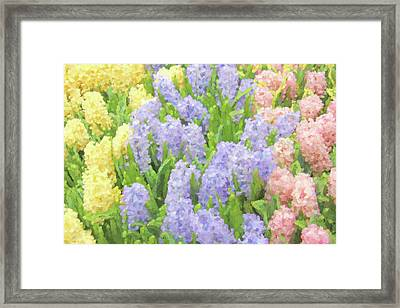 Framed Print featuring the photograph Hyacinth Flowers In The Spring Garden by Jennie Marie Schell