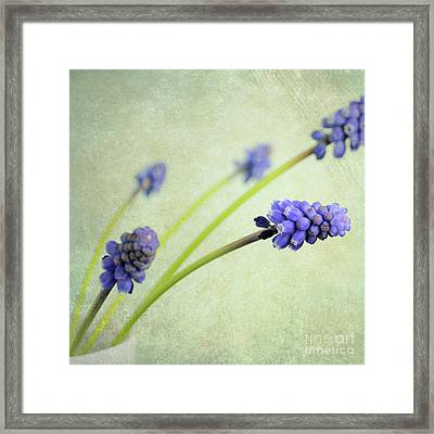 Hyacinth Grape Framed Print