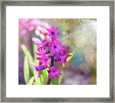Hyacinth Framed Print by Louise Lavallee